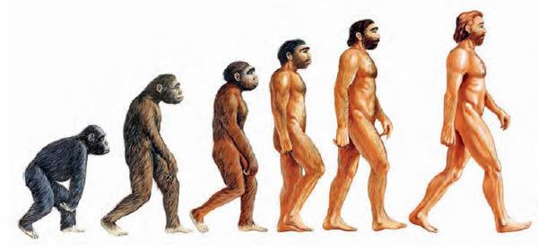 Cronología humana
